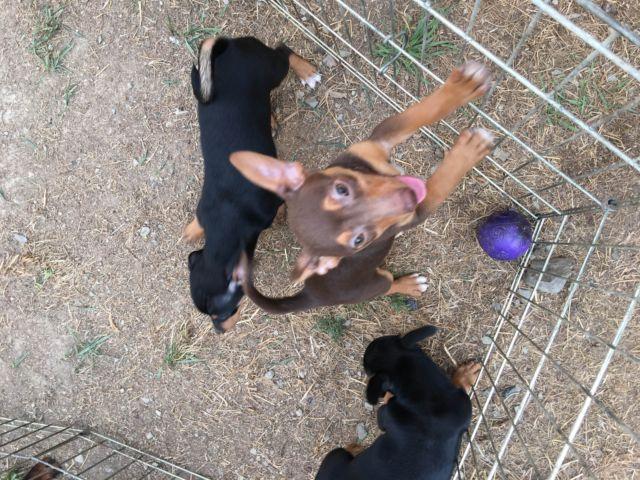 Adorable Rescue Puppies