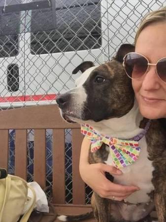 Beautiful loving amstaff Hennesy in danger@Brooklyn kill shelter