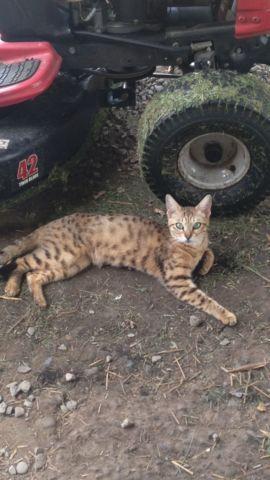Female cat needs home asap