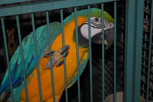 Parrot Adoption application in Central Square, New York