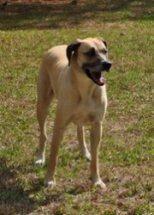 Rottweiler - Princess - Large - Adult - Female - Dog