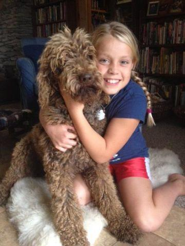 Standard Poodle, Chocolate, Male, 5 years old, very good disposition