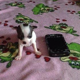 Tiny Male