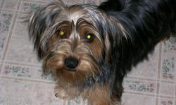I HAVE A SIX YEAR OLD FEMALE YORKIE, FREE TO A GOOD AND LOVING HOME ONLY. I AM ONLY PARTING WITH HER BECAUSE SHE IS JEALOUS OF THE OTHER DOGS WHEN THEY GET NEAR ME. SHE IS A VERY LOVING DOG, BUT IS FOR A PERSON WHITH NO KIDS, AS SHE IS A HEEL NIPPER. SHE