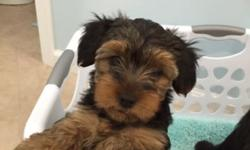 4 female AKC Yorkshire terrier puppies looking for a good home. They have had their first shots and first wormings. Please call or text 585-746-8674 if you are interested. This ad was posted with the eBay Classifieds mobile app.