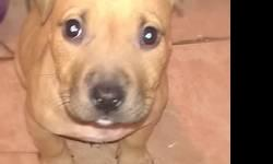 I have a 9 week old female UTD on her shot rework ready for a loving home she great with kids n other pet she verry playful she is create trained