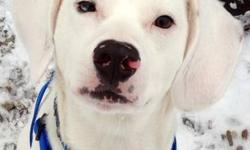 Beagle - Frosty - Medium - Young - Male - Dog How can you resist adopting adorable Frosty?! He's an incredibly sweet, exuberant beagle mix who came to us after his previous owners were unable to care for him. His previous owner reports that he is already