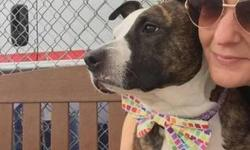 Meet Princess. This lovely american staffordshire terrier was surrendered due to personal problems on the part of her caregiver. From the length of her nails, it looks like she could use some TLC. At 9 yrs of age, she still has plenty of good years ahead