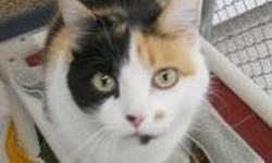 Calico - Katrina - Medium - Adult - Female - Cat CHARACTERISTICS: Breed: Calico Size: Medium Petfinder ID: 25431274 ADDITIONAL INFO: Pet has been spayed/neutered CONTACT: Chemung County Humane Society and SPCA | Elmira, NY | 607-732-1827 For additional