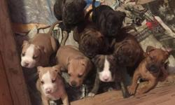 5 Week old Pitbull puppies for sale. They won't be ready for another 2 weeks. I own both parents, and they are home raised and friendly. Text me for any questions.
