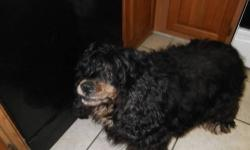 Cocker Spaniel - Little Bear - Medium - Young - Male - Dog CHARACTERISTICS: Breed: Cocker Spaniel Size: Medium Petfinder ID: 25853920 CONTACT: Elmira Animal Shelter | Elmira, NY | 607-737-5767 For additional information, reply to this ad or see: