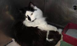 Domestic Long Hair - Marbles - Large - Adult - Male - Cat CHARACTERISTICS: Breed: Domestic Long Hair Size: Large Petfinder ID: 24852734 ADDITIONAL INFO: Pet has been spayed/neutered CONTACT: Elmira Animal Shelter | Elmira, NY | 607-737-5767 For additional