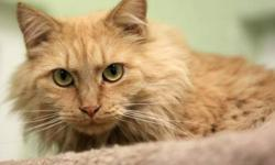 Domestic Long Hair - Smidge - Medium - Adult - Female - Cat CHARACTERISTICS: Breed: Domestic Long Hair Size: Medium Petfinder ID: 26271576 ADDITIONAL INFO: Pet has been spayed/neutered CONTACT: Elmira Animal Shelter | Elmira, NY | 607-737-5767 For
