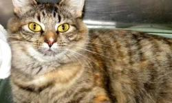 Domestic Medium Hair - Pease - Medium - Adult - Female - Cat CHARACTERISTICS: Breed: Domestic Medium Hair Size: Medium Petfinder ID: 25701064 ADDITIONAL INFO: Pet has been spayed/neutered CONTACT: Elmira Animal Shelter | Elmira, NY | 607-737-5767 For