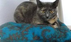 Domestic Short Hair - Harm - Medium - Baby - Female - Cat CHARACTERISTICS: Breed: Domestic Short Hair Size: Medium Petfinder ID: 26165075 CONTACT: Elmira Animal Shelter | Elmira, NY | 607-737-5767 For additional information, reply to this ad or see: