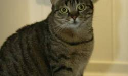Domestic Short Hair - Hilda - Large - Adult - Female - Cat CHARACTERISTICS: Breed: Domestic Short Hair Size: Large Petfinder ID: 26271949 ADDITIONAL INFO: Pet has been spayed/neutered CONTACT: Elmira Animal Shelter | Elmira, NY | 607-737-5767 For