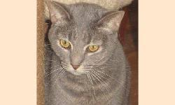Domestic Short Hair - Lucy - Medium - Young - Female - Cat Lucy is a 3 year old female tiger cat. Update - Lucy is in our free roaming room and when one of our largest cats was recently adopted, Lucy came out of her shell over night. Funny how cats are -