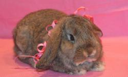 This bunny is brown with darker markings,She is 4 years old.She needs a loving home where someone will pay attention to her.