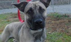 German Shepherd Dog - Roy - Large - Adult - Male - Dog This handsome young man is looking for a new best friend. Roy is a puppy-ish Shepherd mix who loves to play and is very affectionate. We don?t have much information about his past, but he seems like a