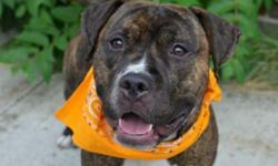 Dusty is located at Brooklyn Animal Care and Control. I am not affiliated with them. For more info about Dusty or to see his current status, copy - paste this link: