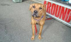 Labrador Retriever - Kira - Large - Adult - Female - Dog Will be available for adoption 10/11/12. CHARACTERISTICS: Breed: Labrador Retriever Size: Large Petfinder ID: 24343319 CONTACT: Elmira Animal Shelter | Elmira, NY | 607-737-5767 For additional