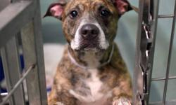 Conen is located at Brooklyn Animal Care and Control. I am not affiliated with them. For more info about Conen or to see his current status, copy - paste this link: https://www.facebook.com/photo.php?fbid=964862086860004 Dog Name: Conen Reason for