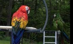 We are having a Macaw Sale! Blue and Gold (aka Big Daddy) 3yr old $600 and Catalina (aka Jarhead) 2yr old $1100. Both are friendly. We take deposits and have a layaway available. Please call 607-732-2700 with any questions.