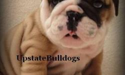 "UpstateBulldogs has been established since 2006. We strive to provide top quality bulldogs for families to love. We are all about preserving the breed, preserving that ""special"" line, and bettering the breed. All pups are UTD on all shots & wormings, come"