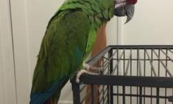 I have a 7 year old military Macaw for sale named Riley. Awesome bird but I have to part with him as I am moving to California. He comes with cage and a separate stand. Please feel free to text or call me. Thank you god bless. This ad was posted with the