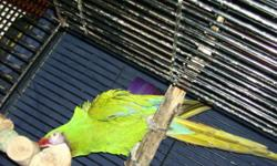 proven pair of breeding macaws will trade for baby blue and gold