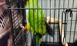 For sale nanday conure around 2 years old gender unknown but it looks like a male not sure $250 or best offer downsizing don't have the space for it email or text for more info 6318875165 This ad was posted with the eBay Classifieds mobile app.