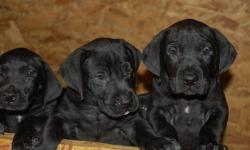expecting a new litter of oes puppies dec 3rd excellent qualiy,pup from last litter is number 1 agility oes in the country..parents hips and eyes clear.pups will be vaccinated,wormed ,vet checked and certified.both parents r gorgeous and have wonderful