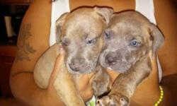 I have a female n male pup for sale utd on shots very playful full of energy loving pups