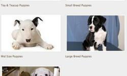 Purebred Cats & Dogs For Sale - $500 $700 store-credit at Westchester Puppies & Kittens. It is a luxury pet store that sells and provides other services for Exotic or Purebred Puppies and Kittens. From tea cup/toy, small, mid, large-size, bulldog, to