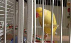 i have a red ring neck parakeet his name is Skittles he come with his cage I'm asking for $300 any questions call me at 585-369-9799 Skittles know how to talk he love peanuts sunflower apples carrots and etc