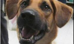 Shepherd - Ruthie - Medium - Adult - Female - Dog Ruthie is a young, female, shepherd mix who came to us as a stray. She is wiggly and happy and just brimming with playful energy. She would do best in a home where she can get plenty of exercise. We don't