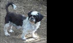 Shih Tzu - Mollie And Harry - Small - Adult - Male - Dog This pair must stay together. Best friends..cute as can be CHARACTERISTICS: Breed: Shih Tzu Size: Small Petfinder ID: 24555141 ADDITIONAL INFO: Pet has been spayed/neutered CONTACT: Forgotten