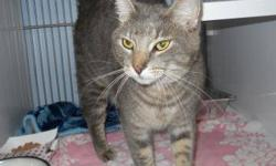 Tiger - Alex - Medium - Adult - Male - Cat CHARACTERISTICS: Breed: Tiger Size: Medium Petfinder ID: 24355664 ADDITIONAL INFO: Pet has been spayed/neutered CONTACT: Chemung County Humane Society and SPCA | Elmira, NY | 607-732-1827 For additional