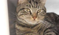 Tiger - Walsh - Medium - Adult - Male - Cat CHARACTERISTICS: Breed: Tiger Size: Medium Petfinder ID: 25204219 CONTACT: Chemung County Humane Society and SPCA | Elmira, NY | 607-732-1827 For additional information, reply to this ad or see: