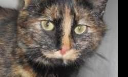 Tortoiseshell - Kelly - Medium - Adult - Female - Cat CHARACTERISTICS: Breed: Tortoiseshell Size: Medium Petfinder ID: 25183303 ADDITIONAL INFO: Pet has been spayed/neutered CONTACT: Chemung County Humane Society and SPCA | Elmira, NY | 607-732-1827 For
