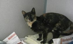 Tortoiseshell - Skylar - Small - Young - Female - Cat Skylar came from a local farm and originally I thought she'd be a great farm cat, however she is now looking for attention and affection. Skylar was recently moved to our free roaming room and LOVES