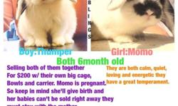 I have two adorable bunnies one girl-momo and one boy-thumper in need of a good home they come with their own cage carrier and bowls. Breed:holland lop
