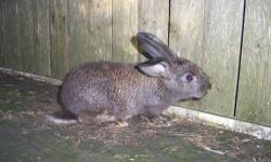 Assorted young rabbits will make great pets, parents friendly . Many colars as well as pure white.
